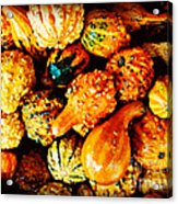 More Beautiful Gourds - Heralds Of Fall Acrylic Print