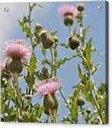 More Blooming Weeds Acrylic Print