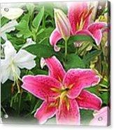 More Lilies Acrylic Print by Victoria Sheldon