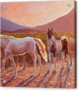 More Than Light Arizona Sunset And Wild Horses Acrylic Print