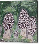 Morel Mushrooms Acrylic Print
