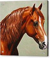 Morgan Horse - Flame Acrylic Print