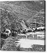 Mormon Emigrant Conestoga Caravan 1879 - To Utah Acrylic Print
