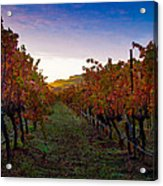 Morning At The Vineyard Acrylic Print by Bill Gallagher