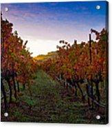Morning At The Vineyard Acrylic Print