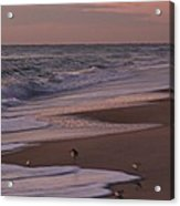 Morning Birds At The Beach Acrylic Print