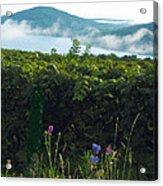 Morning Blossoms Acrylic Print