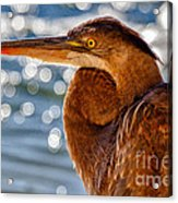 Morning Blue Acrylic Print by Pam Vick