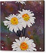 Morning Daisies Acrylic Print