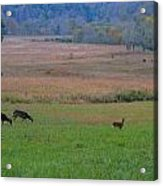Morning Deer In Cades Cove Acrylic Print