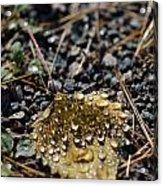 Morning Dew On Autumn Leaf Acrylic Print