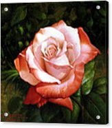 Morning Dew On The Rose Faded Acrylic Print