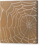Morning Dew On Web Acrylic Print