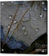 Morning Dew Acrylic Print by Steven Valkenberg
