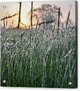 Morning Dew - View Through The Grass Acrylic Print