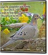 Morning Dove With Verse Acrylic Print