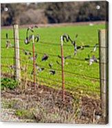 Morning Doves In December  Acrylic Print