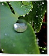 Morning Fresh Leaves With Droplets Acrylic Print