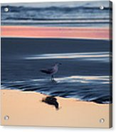 Morning Gull Acrylic Print