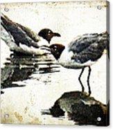 Morning Gulls - Seagull Art By Sharon Cummings Acrylic Print by Sharon Cummings