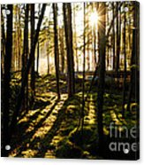 Morning In Canoe Country Acrylic Print