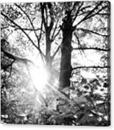 Morning In The Forest Acrylic Print