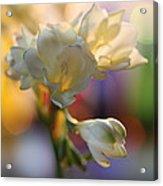 Morning Light Acrylic Print by Etti PALITZ