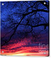 Morning Light Oak Tree Acrylic Print
