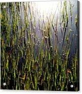 Morning Light Of God Acrylic Print