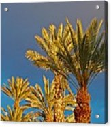 Morning Light Palms Acrylic Print