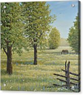 Morning Meadow Acrylic Print
