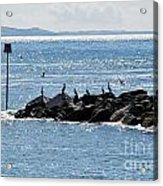 Morning Meeting - Lyme Regis Acrylic Print