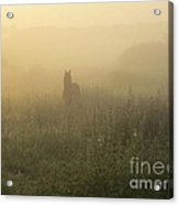 Morning Mist In The Meadow Acrylic Print