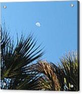 Morning Moon Over Palms Acrylic Print