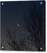 Morning Moon Acrylic Print