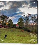 Morning On The Farm Four Acrylic Print