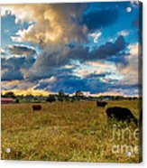 Morning On The Farm Two Acrylic Print