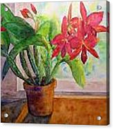 Morning Orchids Acrylic Print