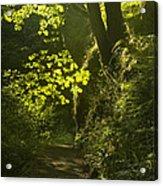 Morning Path Acrylic Print by Andrew Soundarajan
