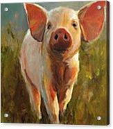Morning Pig Acrylic Print