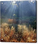 Morning Rays Through Live Oaks Acrylic Print