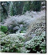 Morning Snow In The Garden Acrylic Print