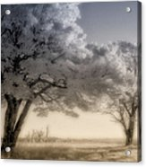 Morning Softness II - Blue Ridge Parkway Acrylic Print