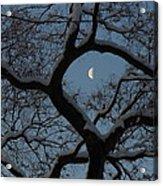 Morning Twilight Acrylic Print