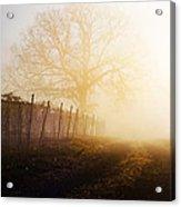 Morning Vineyard Acrylic Print by Shannon Beck-Coatney
