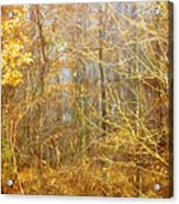 Landscape - Morning Walk In The Woods - 2 Acrylic Print