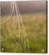 Morning Web Acrylic Print