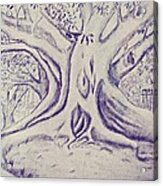 Morton Bay Tree Acrylic Print