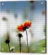 Mosaic Flower Acrylic Print