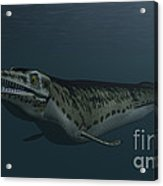 Mosasaur Swimming In Prehistoric Waters Acrylic Print